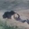 смертельное селфи с медведем