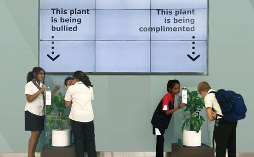 школьники издевались над растением