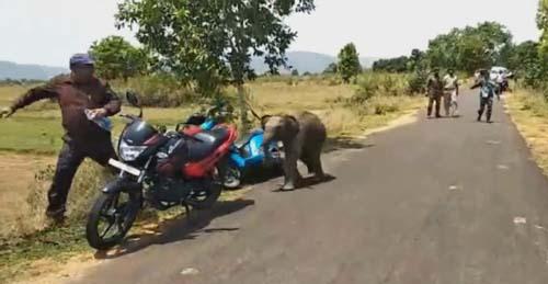 слонёнок напугал людей