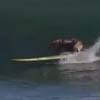 пёс занимается серфингом