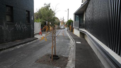дерево посреди дороги