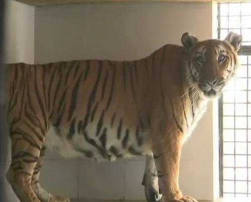 защита животных в зоопарке от жары