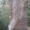 волосатые черви на дереве