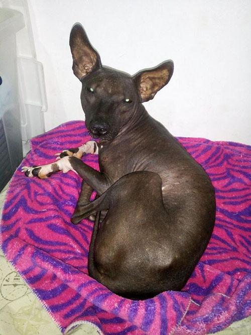 оскорбительная фотография щенка