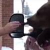 кормление медведя мороженым