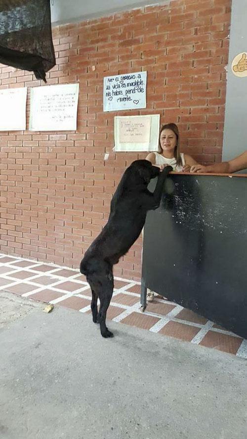собака научилась покупать печенье