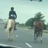 погоня за сбежавшей лошадью