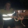 мужчина поймал змею