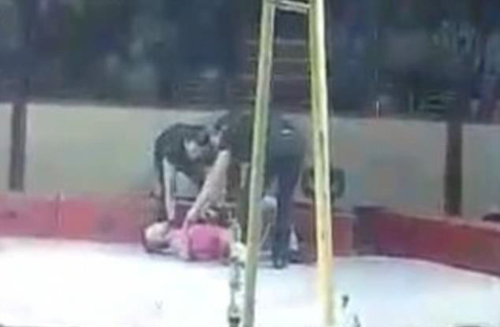 циркач упал с высоты
