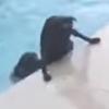 пёс спас друга из бассейна