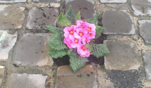 цветы в ямах на дорогах