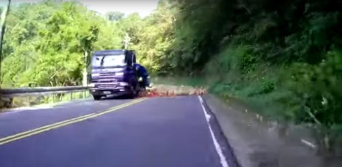 арбузы высыпались на дорогу