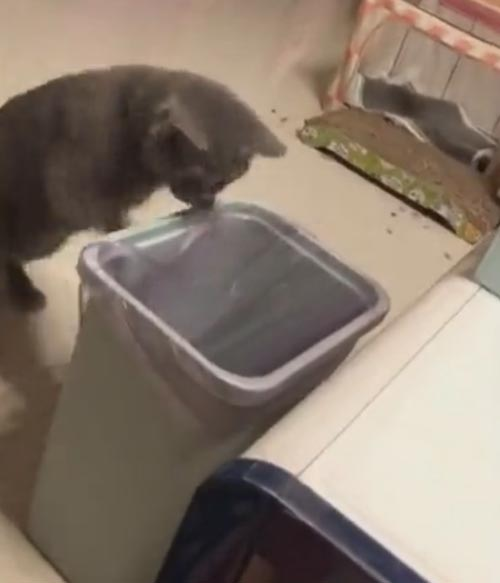 мама-кошка уронила котёнка