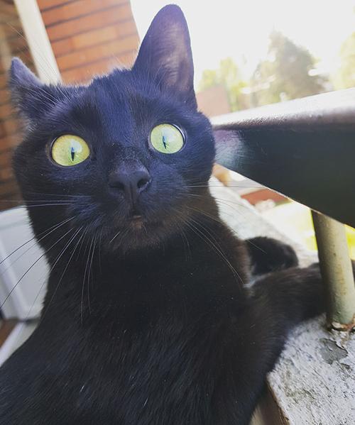 кошка в первый раз на балконе