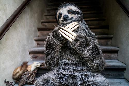 костюм в виде ленивца