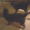 кот и его отражение