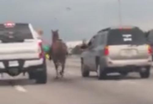 лошадь сопроводили на обочину