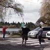 бобру помогли перейти дорогу