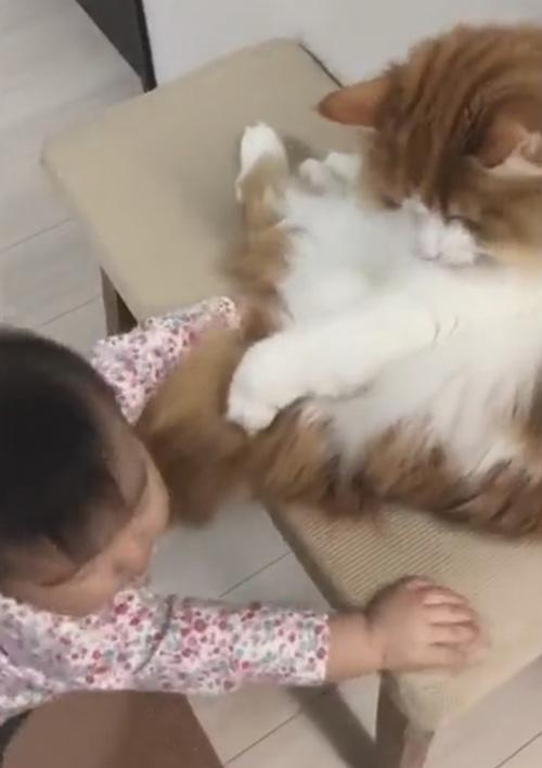 малыш дружит с кошкой