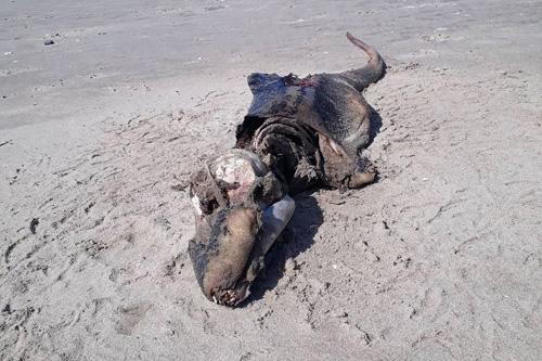 таинственный крокодил на пляже