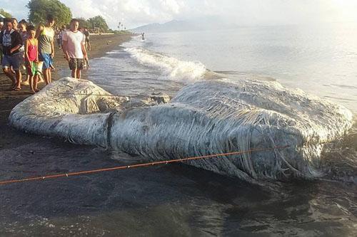 дурно пахнущий морской монстр