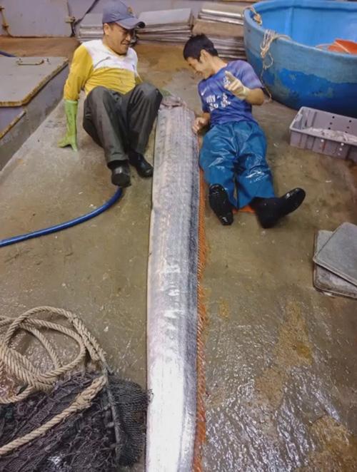 рыбаки поймали длинную рыбу