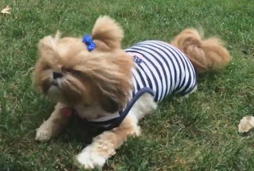 собака под листодувом