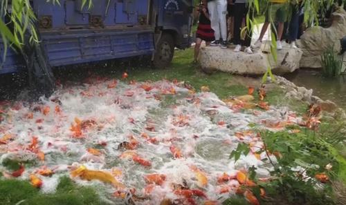 ошеломительное рыбное наводнение