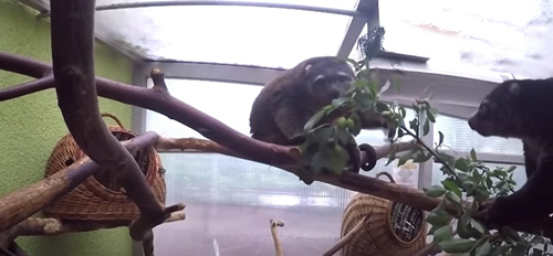 новый подопечный в зоопарке