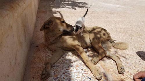 котёнок заменил собаке щенков