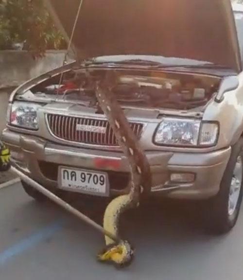 питон под капотом машины