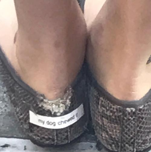 собака пожевала обувь
