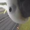 попугай снялся в видеоролике