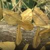 миллионы бабочек радуют туристов