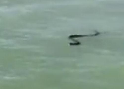 ядовитая змея и туристы в лодке