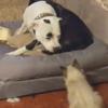 игривый котёнок и собака