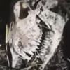 таинственный скелет в лесу