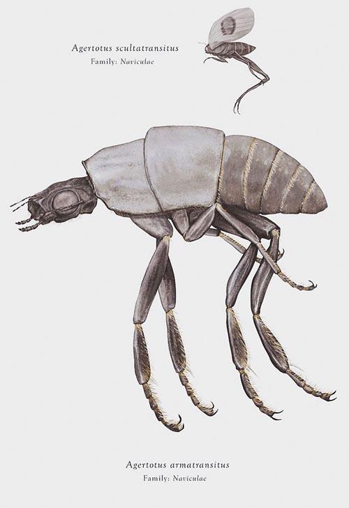 насекомые из звёздных войн