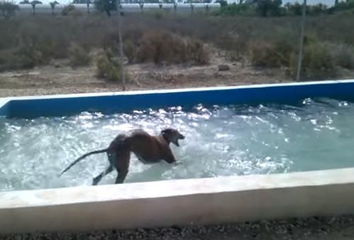 счастливая собака в бассейне