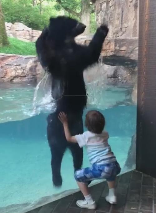 медведь прыгает вместе с мальчиком