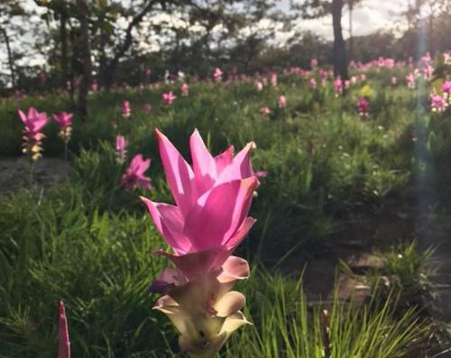 люди любуются на цветущие поля