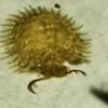 демоническое насекомое с клешнями