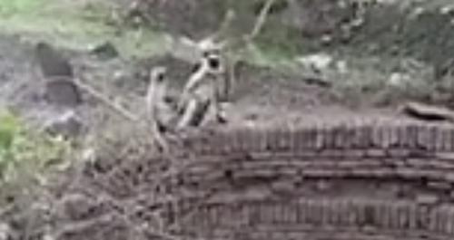 обезьянку спасли из колодца