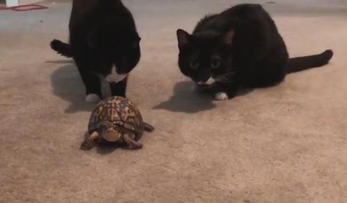 нудная охота на черепаху