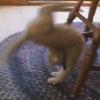 красивый кувырок котёнка
