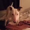 счастливая приютская собака