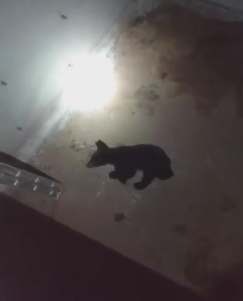 медвежонок освоил лестницу