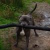 пёс нашёл на прогулке палку