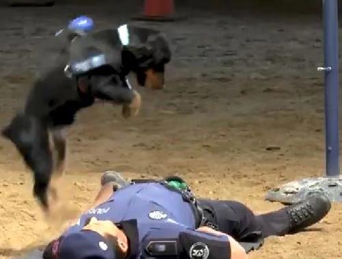пёс научился делать реанимацию
