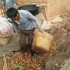 фермер растоптал фрукты